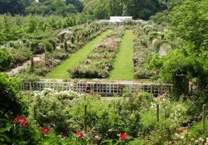 The Brooklyn Botanic Garden
