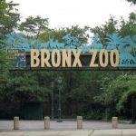 Sitios turísticos en el Bronx