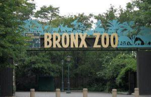 Parque Zoológico del Bronx
