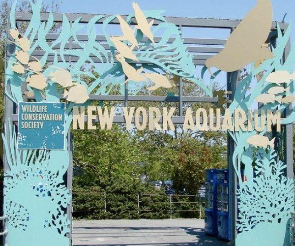 Acuario De Coney Island Ny