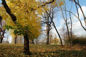 El otoño en Nueva York